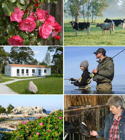 Travel experience to Gotland