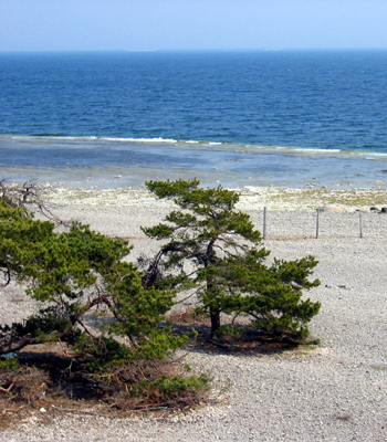 Rent a cottage close to sea and nature on Gotland